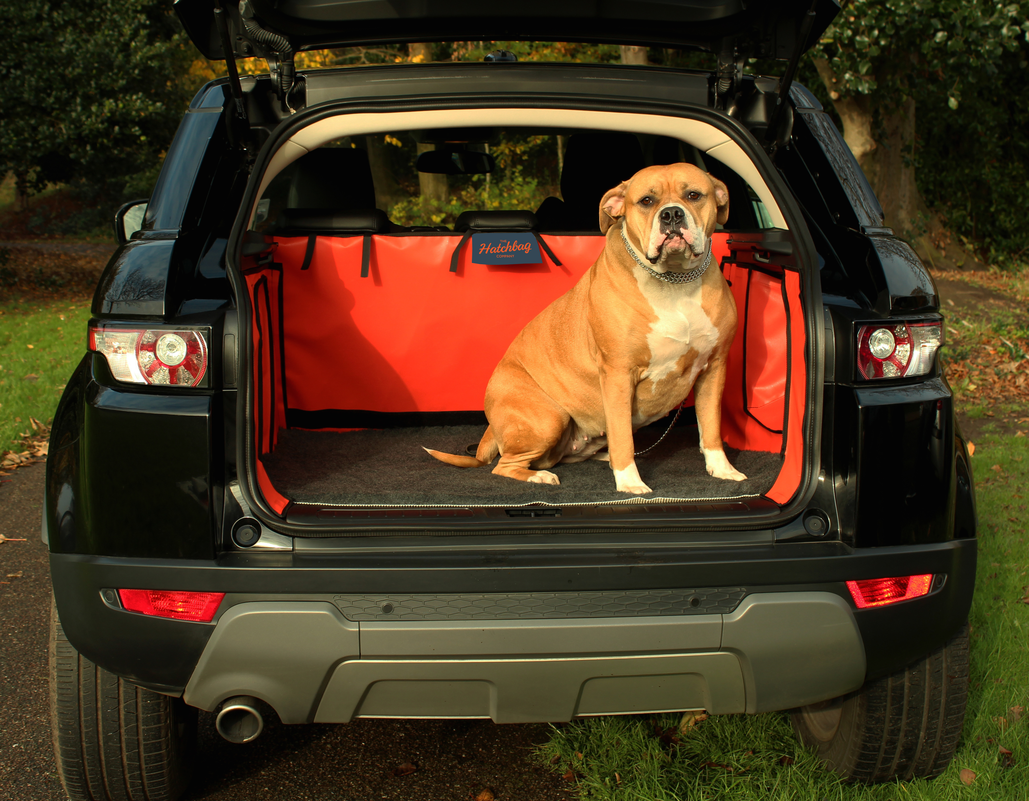 Why Dog Owners Need A Car Boot Liner Hatchbag Blog