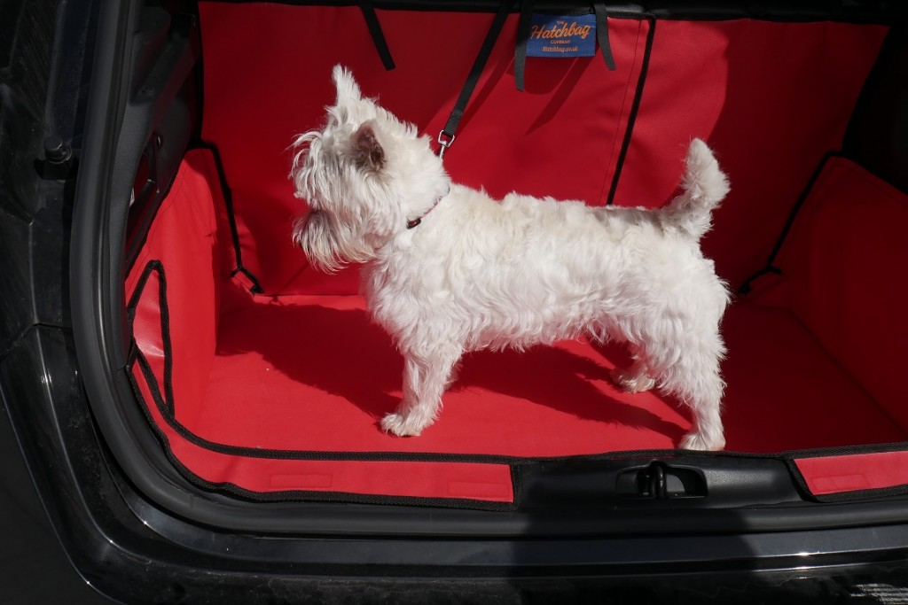 Small White Puppy in Red Boot Liner