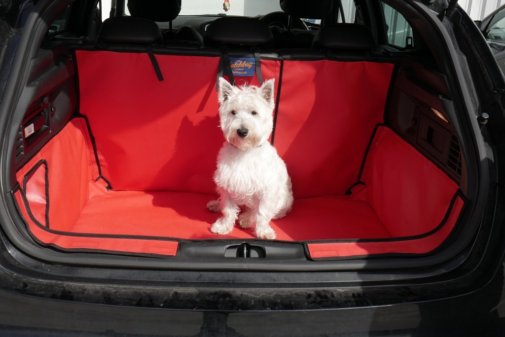 Small White dog sitting in red boot liner