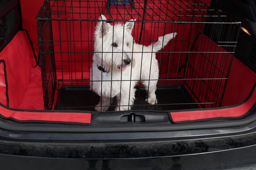 Small Dog in Dog Cage in Red Boot Liner