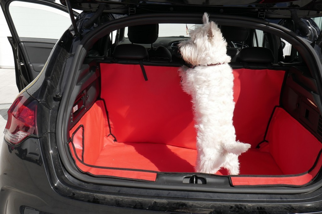 Small White Dog climbing up vehicle seats