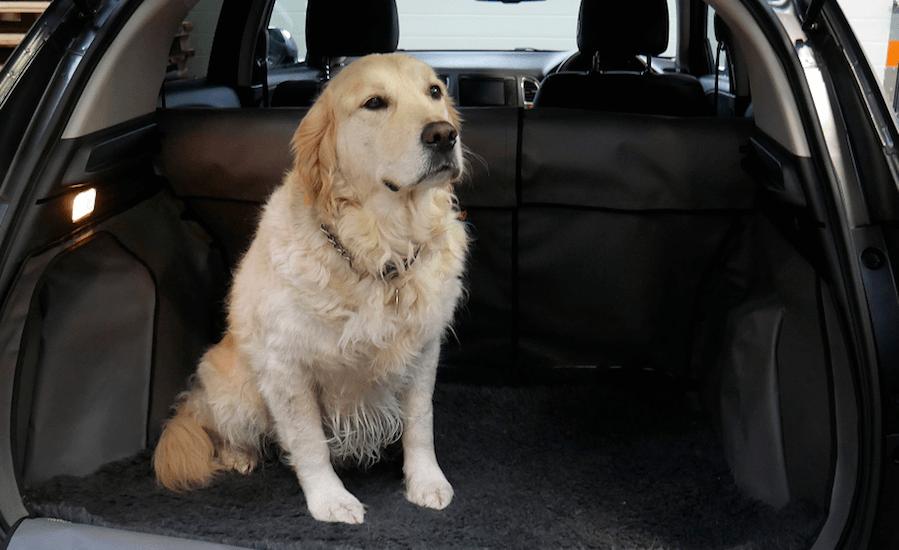 H0638-Ollie dog